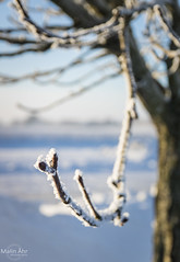 Snow in Southern Sweden. (malinahr) Tags: sunset sky snow color tree ice clouds canon is skne frost sweden bokeh outdoor sigma sverige sn sterlen solnedgng simrishamn moln tobisvik