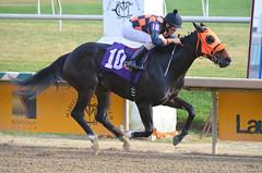 "2015-12-13 (69) r5 Roimes Chirinos on #10 Michelle (JLeeFleenor) Tags: photos photography md marylandracing marylandhorseracing laurelpark jockey جُوكِي ""赛马骑师"" jinete ""競馬騎手"" dżokej jocheu คนขี่ม้าแข่ง jóquei žokej kilparatsastaja rennreiter fantino ""경마 기수"" жокей jokey người horses thoroughbreds equine equestrian cheval cavalo cavallo cavall caballo pferd paard perd hevonen hest hestur cal kon konj beygir capall ceffyl cuddy yarraman faras alogo soos kuda uma pfeerd koin حصان кон 马 häst άλογο סוס घोड़ा 馬 koń лошадь bay winner maryland"