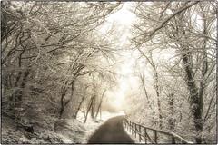 Welcome to Narnia (Elanor82) Tags: road italien trees winter light italy panorama snow nature alberi canon torino eos san strada italia view valle natura sacra piemonte valley narnia neve michele inverno turin priroda susa luce paesaggio 18135 700d