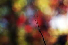 among the trees (SS) Tags: blue autumn light red italy plant abstract colors yellow bokeh lazio 2015 smcpentaxm50mmf17 borgosanpietro pentaxk5 ss