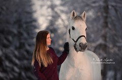 Prince & Elise 2 (Hestefotograf.com) Tags: winter horses horse snow love oslo norway caballo bokeh pony camouflage cavalos ponies forever pferde dappled cavalo pferd whitehorse equine equus paard horseandgirl equinephotography equinephotographer hestefotograf