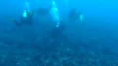 Drifting around (Yuxuan.fishy.Wang) Tags: hawaii video scuba diving manta mantaray