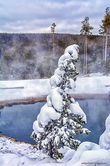 Yellowstone park (Pattys-photos) Tags: park winter yellowstone pattypickett