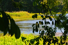 Gamboa Panam (Luis Eduardo ) Tags: wild lake green nature water luismosquera