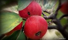 Fruta biológica