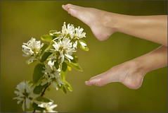 Bare Foot Touch (swong95765) Tags: flowers white plant feet toes soft blossom bokeh feel sensual peasoup ticklish