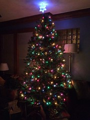"""Christmas Star of David on Adam and Sara's Tree • <a style=""""font-size:0.8em;"""" href=""""http://www.flickr.com/photos/109120354@N07/24798699866/"""" target=""""_blank"""">View on Flickr</a>"""