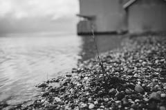 High Water (reclaimednj) Tags: road monochrome flooding nj landing climatechange 2016 sealevelrise amasa burlingtoncounty bassrivertownship crameroysterhouse