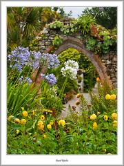 Agapantheus (flatfoot471) Tags: summer england holiday nature cornwall unitedkingdom normal tresco islesofscilly abbeygardens 2015