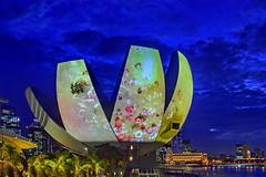 What A Loving Beautiful World (chooyutshing) Tags: facade singapore interactive marinabay multisensory marinabaysands artsciencemuseum ilightmarinabay2016 teamlabjapan whatalovingbeautifulworld25