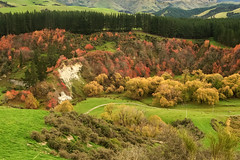Colours of New Zealand (natures-pencil) Tags: autumn trees red newzealand green grass landscape gold chalk pacific path scenic calm hills colourful pastoral telephonepoles bushes telephonewires conifers windbreak