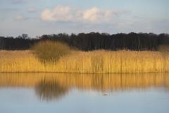 rustpunt . (look to see) Tags: winter warm belgium beek zen bree avondlicht 135mm sonnar 2016 explored ausjena mariahof rustpunt
