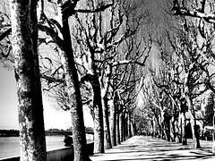 Contraste (rgrant_97) Tags: park parque trees winter cidade bw portugal monochrome contrast effects olympus pb planes contraste coimbra plátanos