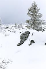 Winter in the mountain (Anders Sellin) Tags: winter ski sport fun vinter europe skiing sweden snowboard sverige semester slalom skidor theworld vemdalen sportsholiday