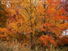Fabulous Foliage-Rockleigh NJ (moelynphotos) Tags: park autumn newjersey colorful seasons fallcolors peak fullframe surburban deciduoustrees beautyinnature moelynphotos