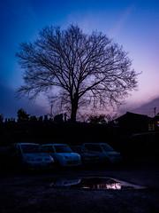 PhoTones Works #7638 (TAKUMA KIMURA) Tags: tree nature silhouette landscape evening twilight scenery olympus     kimura    penf takuma   photones