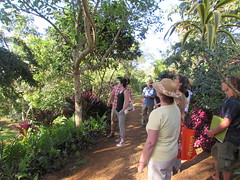 Judy, Princeville Botanical Garden (popea53) Tags: hawaii kauai princeville