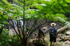 Poonyahra Falls and tree fern (NettyA) Tags: waterfall rocks australia bushwalking qld queensland bushwalk treefern springbrook goldcoasthinterland 2016 springbrooknationalpark scenicrim seqld warriecircuit bushwalker scbwc sonya7r poonyahrafalls