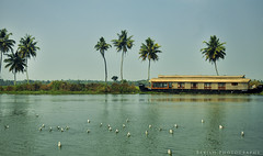 Beautiful Alleppey (Babish VB) Tags: travel india lake bird tourism nature water birds fun boat paddy houseboat kerala enjoy leisure backwaters coconuttrees boatride alleppey backwatercruise