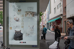 Have you ever read the Natsume Soseki? (kasa51) Tags: street people sign japan poster typography busstop kawasaki natsumesoseki  iamacat   newspaperserialnovel 100