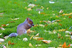 Resident of the Park (tommyleonard777) Tags: bostoncommon
