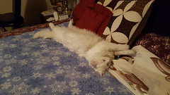 These cats. Oi (denebola2025) Tags: family pet cats cute cat utah view north adorable cuteness ogden pleasant