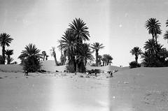 3162-11-035 (pinata2501) Tags: desert morocco maroc 2016 mhamid