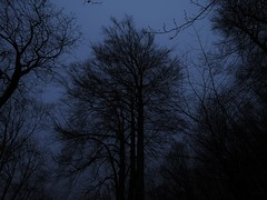 blue hour (mknt367 (Panda)) Tags: morning tree night forest earlymorning bluehour dust 2016