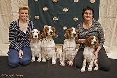 5. WSSCSW_2016_Champ_show_031_w (evinrisca) Tags: wales championship spaniel springer springerspaniel welsh dogshow chepstow wsscsw