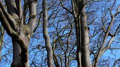 160416Lanark2576tmw (GeoJuice) Tags: scotland geography lanark clydevalley fallsofclyde geojuice