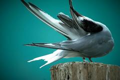 Yoga Birdie (Marcela McGreal) Tags: ny newyork color bird yoga birdie zoo bronx bronxzoo thebronx aquaticbirdhouse nikond3300
