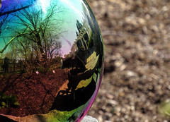 Reflections of the garden (Sky_PA (Catching up slowly- On/Off)) Tags: reflection tree texture nature glass colors beautiful canon ball reflections garden spring colorful glow bokeh outdoor decorative depthoffield pa soil ornament hershey lightandshadow hersheygardens amateurphotography sx50