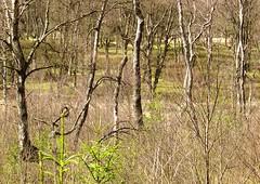 Depth (Gert Vanhaecht) Tags: trees light color colour tree green nature composition canon landscape availablelight hogevenen canonpowershotsx700hs gertvanhaecht