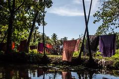 Washing on the keralan backwaters (james_hammond) Tags: trees india colour green water kerala sheets line laundry rivers cochin washing kochi backwaters