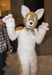 _DSC9074 (Acrufox) Tags: midwest furfest 2015 furry convention december hyatt regency ohare rosemont chicago illinois acrufox fursuit fursuiting mff2015