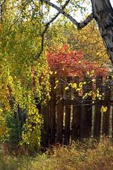 DSC_6033 (Rustam Bikbov) Tags: autumn september 2012    sverdlovskoblast