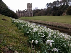 Fountains Abbey (deadmanjones) Tags: snowdrops fountainsabbey riverskell