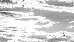 B I R D 2 (wildbam25) Tags: sun white black bird sonne weiss schwarz vogel weis