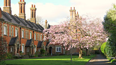 Cherry Blossom Courtyard! ('cosmicgirl1960' NEW CANON CAMERA) Tags: houses green buildings hampshire manmade winchester redbrick yabbadabbadoo