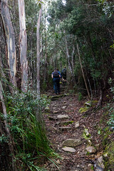 Ice House Track, Mt Wellington