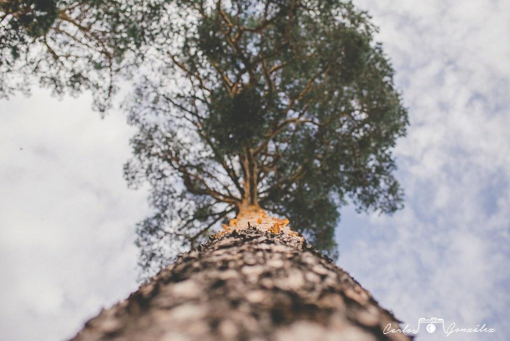 carlos-gonzalez-www-carlosgonzalezf-com-imagen-0107_web