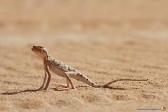 3-Oman-Desert-Marathon-Day-6_0069