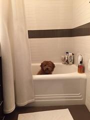 Shasta's Winnie can't believe it is bath time already!