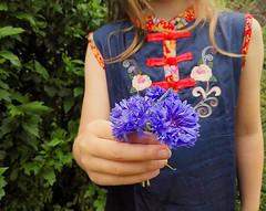 Cornflowers from the garden #oursummergarden #cornflowers (Heart felt) Tags: cornflowers oursummergarden uploaded:by=flickstagram instagram:photo=11301288146589784691642322975