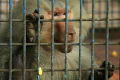 Prison Life - XIV (Rafee Mizan Khan Chowdhury Niloy) Tags: people nature canon garden botanical zoo wildlife photowalk dhaka mirpur 70d