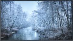 Alouette Dreams (Maclobster) Tags: mist fog creek river maple stream south columbia ridge british alouette leaning depth keithgrajala