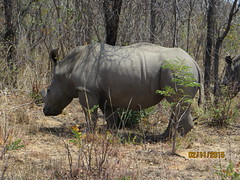 Zimbabwe (214) (Absolute Africa 17/09/2015 Overlanding Tour) Tags: africa2015