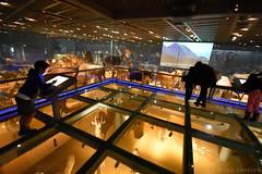 Animal Gallery Glass Floor (Bri_J) Tags: japan museum tokyo    uenopark glassfloor   globalgallery nationalmuseumofnatureandscience animalgallery