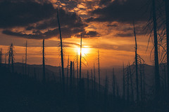 it's the end if the world as we know it (thedecentexposure) Tags: sun usa national yosemite kalifornien woods bush waldbrand park sky trees wfire 2006