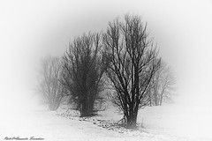 Snow storm in Dolomiti (alessandrafinocchiaro67) Tags: trees white mountain snow black cold monochrome field open solitary daarklands nikond750